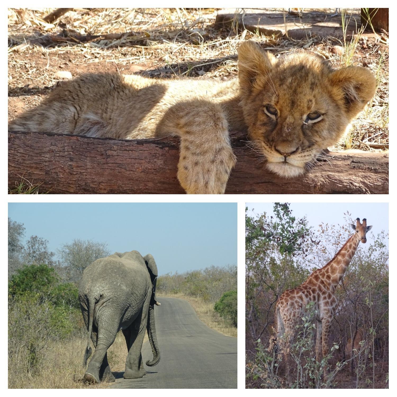 De ultieme rondreis door Zuid-Afrika