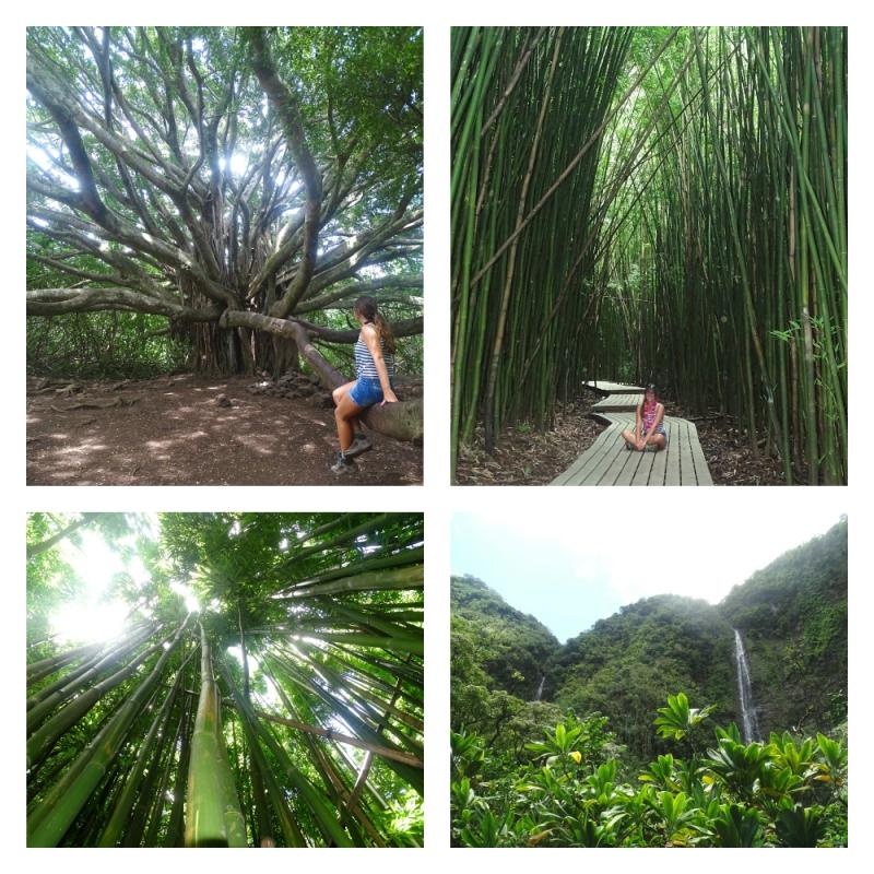 Pipiwai Trail tijdens Road to Hana